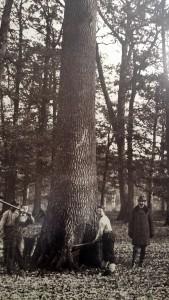 Kirijaši Spačvanska šuma Županja