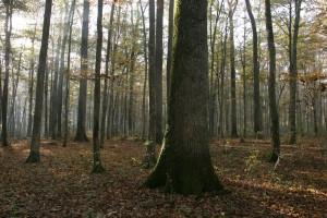 Spačvanska šuma (3)