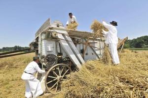 Dio radnika prikazuje stavljanje žito u vršilicu, a dio pregledava vreće u koje se pohranjuje žito